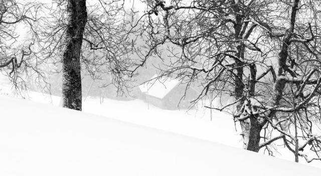 Dani Schwander - verschneit